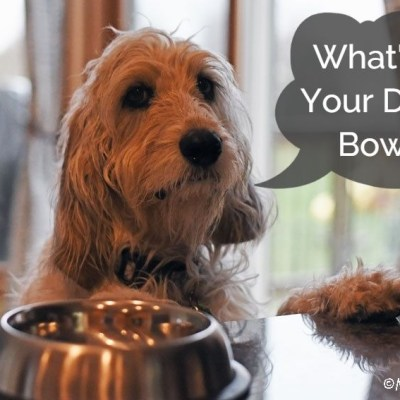 The Evolution Of Dog Food At Our House – What's In Our Bowls?