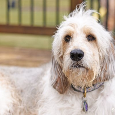 National Pet ID Week 2019 – Are You Ready If Your Dog Goes Missing?