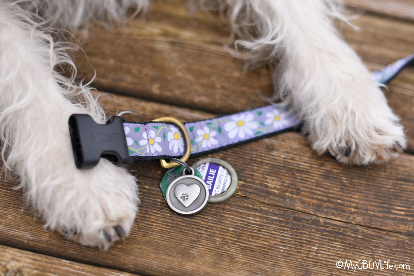 My GBGV Life National Pet ID Week 2019 - Are You Ready If Your Dog Goes Missing?