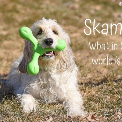 Skamp? A Dog Toy Made To Be Scampered With