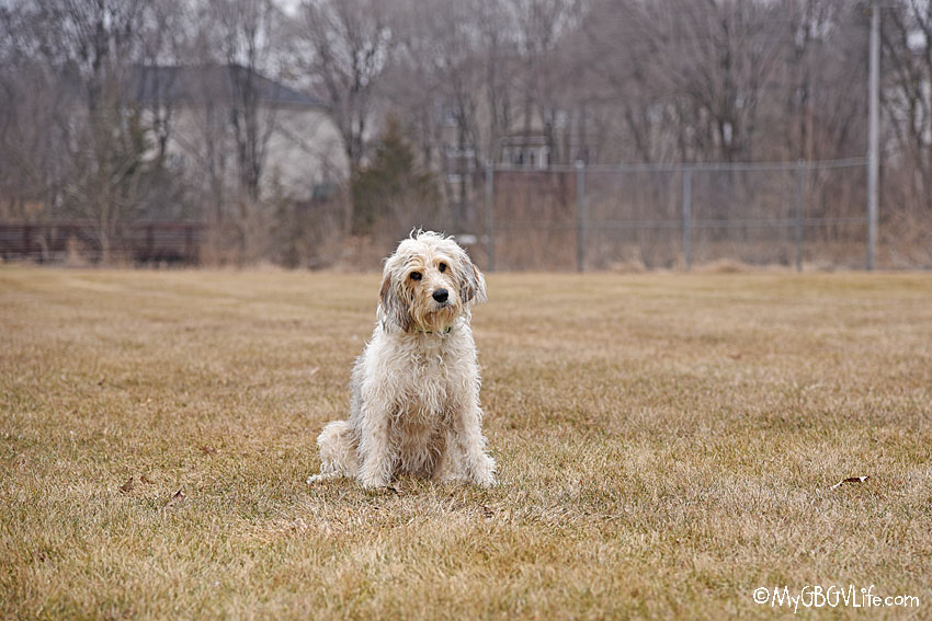 My GBGV Life Composition - Center Frame Portrait #DogwoodWeek14