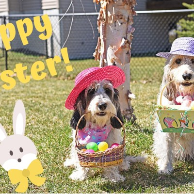 My GBGV Life Happy Easter Sunday From Our House To Yours