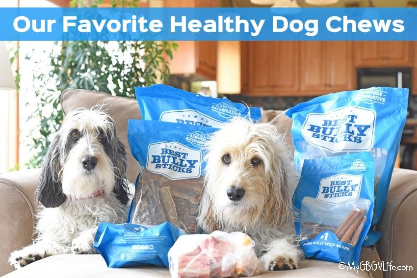 My GBGV Life Healthy Dog Chews Make Perfect Evening Snacks