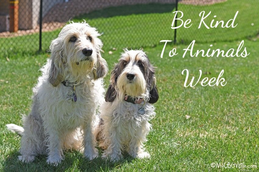 My GBGV Life Be Kind To Animals Week - What Can You Do?