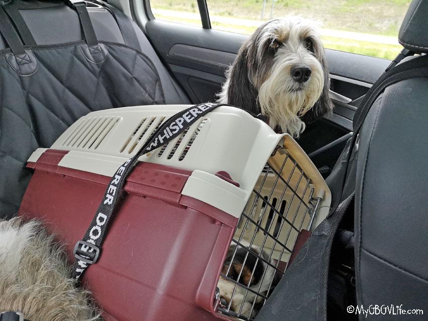 My GBGV Life Road Trip To Missouri - Fetching Olivia