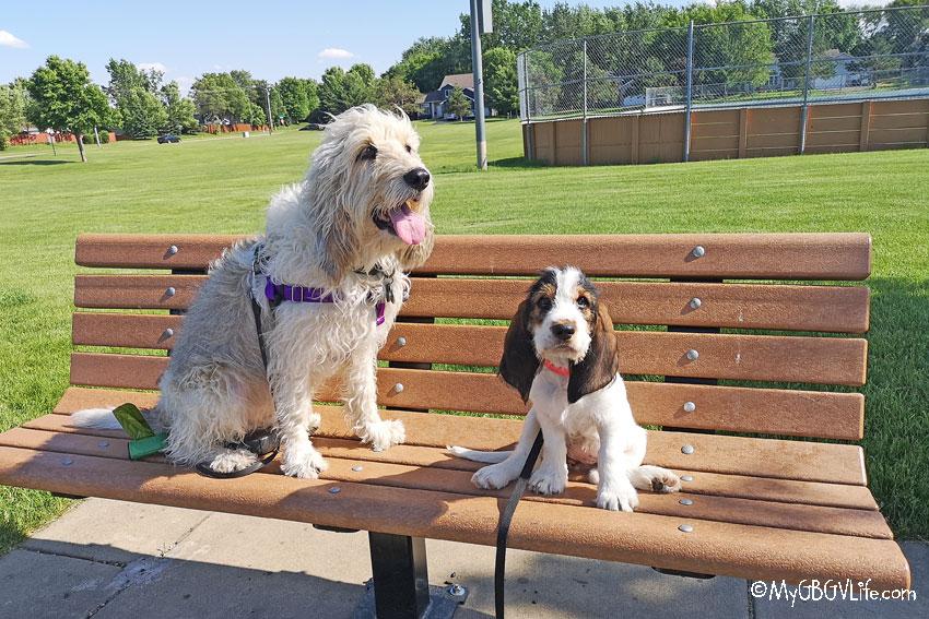My GBGV Life at the park
