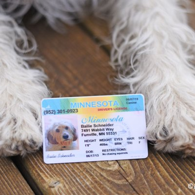 My GBGV Life Pet Drivers License - There's a New Hound On The Road!