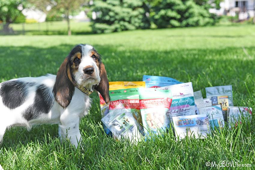 My GBGV Life new puppy Olivia poses with treats