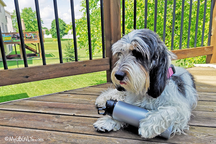 GBGV Madison with reusable water bottle
