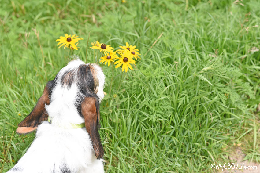 My GBGV Life smelling flowers
