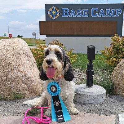 A Scent Work Trial At Base Camp In Bloomington