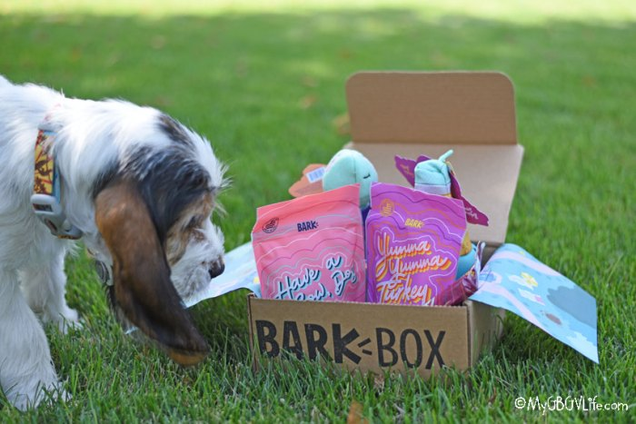 Entertain Your Puppy With Bark Box