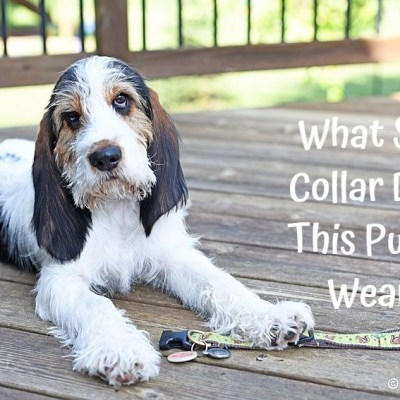 What Size Collar Do You Wear Olivia?