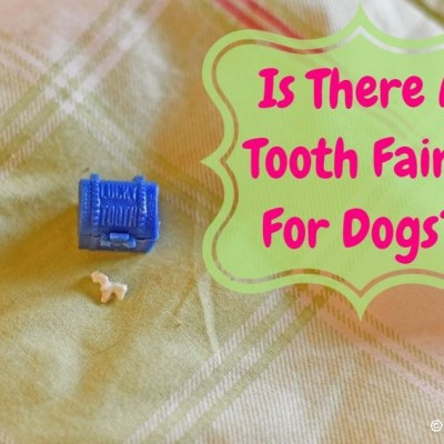 Is There A Tooth Fairy For Dogs?