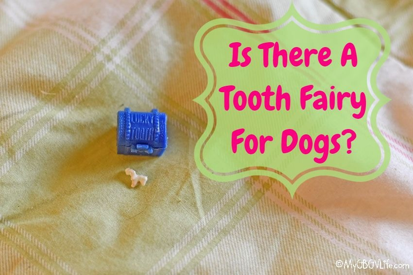 My GBGV Life Is There A Tooth Fairy For Dogs?