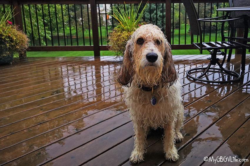 My GBGV Life Bailie in the rain