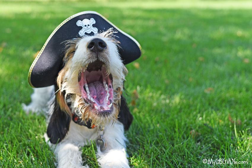 My GBGV Life Yo Ho Ho It's Talk Like A Pirate Day