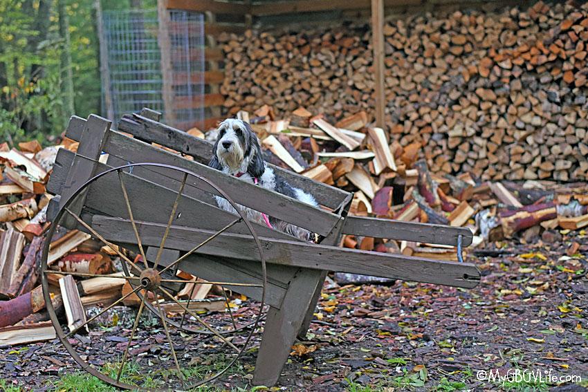 My GBGV Life plenty of firewood