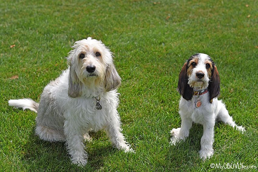 My GBGV Life Celebrate National Dog Week