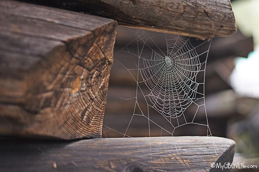 My GBGV Life spider web