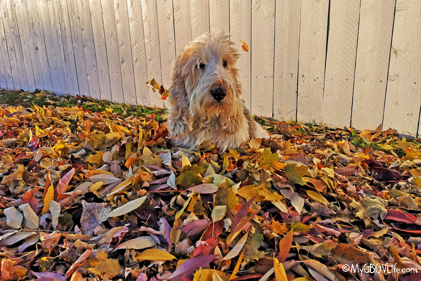 My GBGV Life inthe leaves