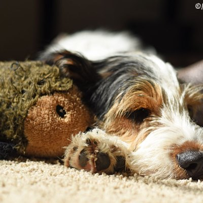 A Sun Puddle And A Hedgehog Is All A Pup Needs