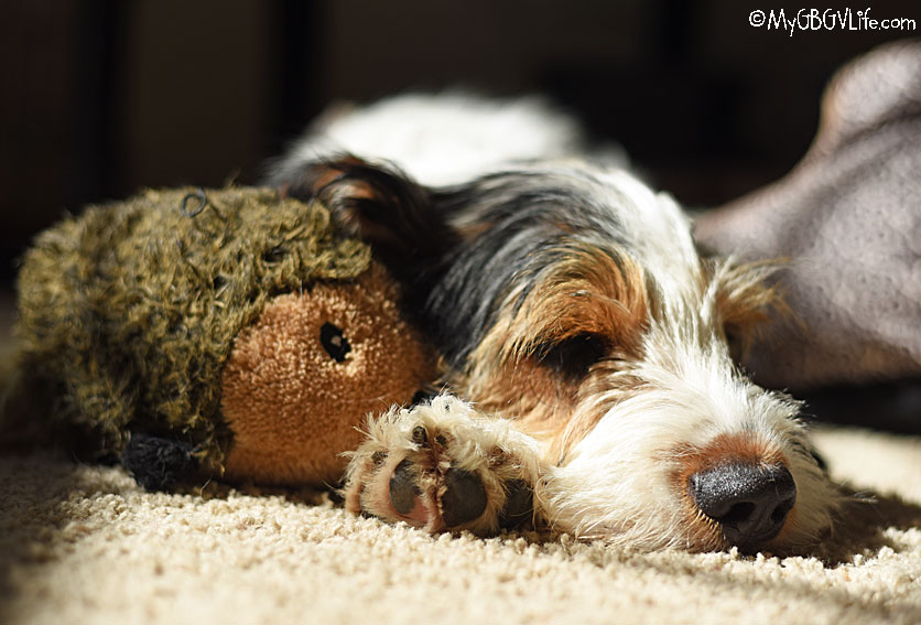 my GBGV Life A Sun Puddle And A Hedgehog Is All A Pup Needs