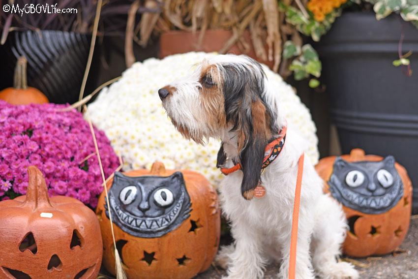 My GBGV Life halloween decorations