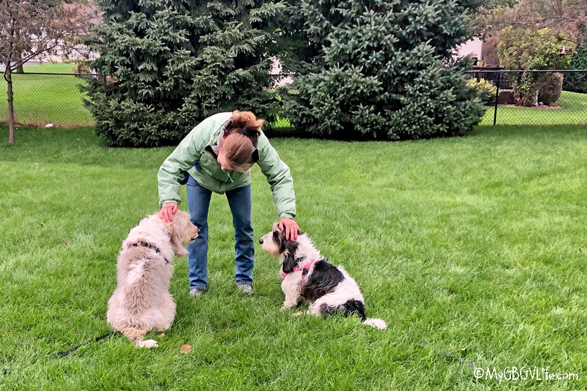 My GBGV Life Repairing A Damaged Relationship Between Dogs