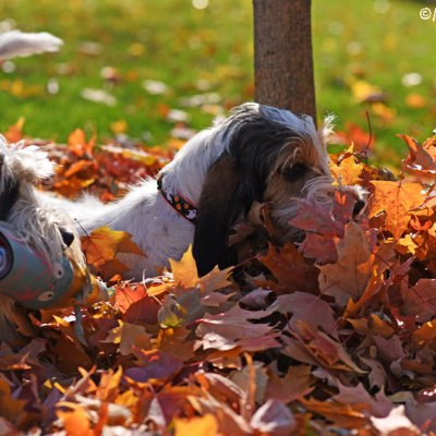 Fall Leaves Make For Loads Of Backyard Fun