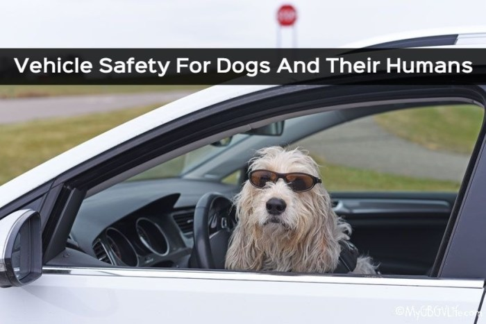 Vehicle Safety For Dogs And Their Humans