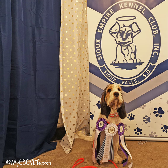 My GBGV Life Another Big Weekend In Sports For The Puppy