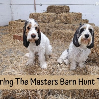 Mastering The Masters Barn Hunt Tunnel