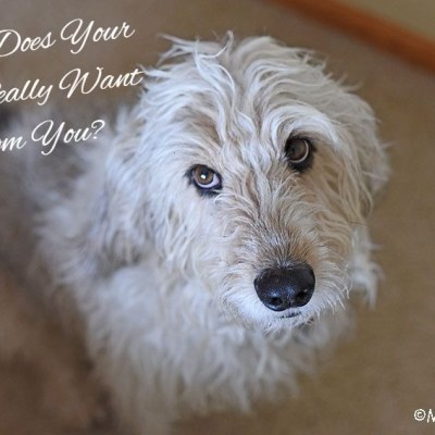 What Does Your Dog Really Want From You?