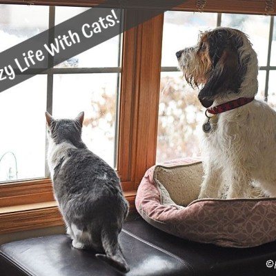 The Crazy Life With Cats – Feline Friday