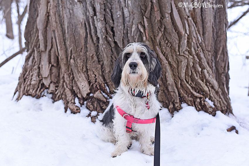 My GBGV Life Madison by tree