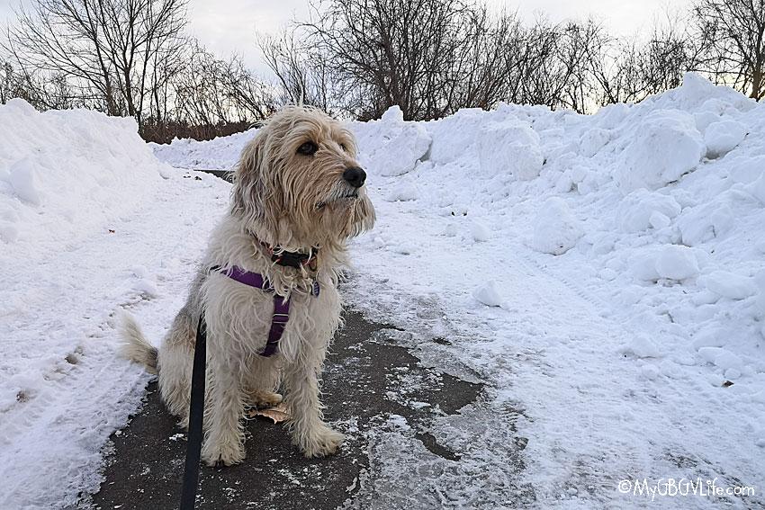 My GBGV Life snow piles