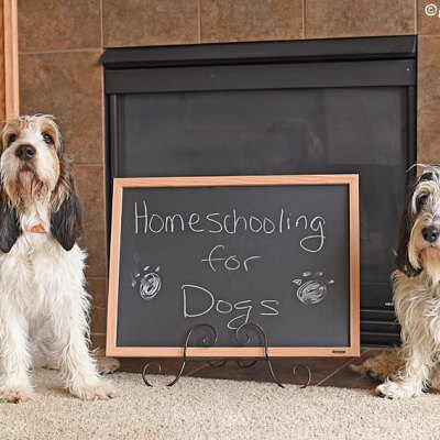 My GBGV Life Homeschooling For Dogs - Why Not Give It A Try?