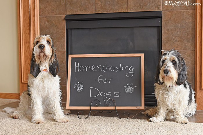 Homeschooling For Dogs – Why Not Give It A Try?