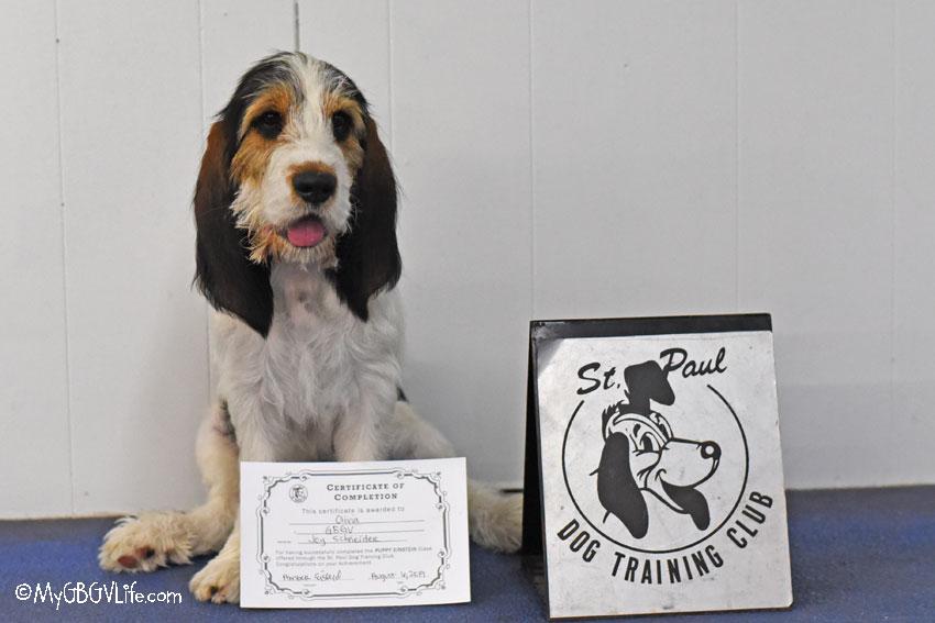 My GBGV Life Puppy Einstein graduation