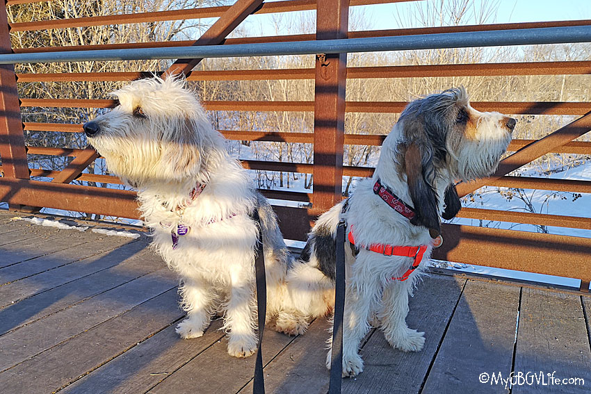 My GBGV Life springtime walking tips for dogs