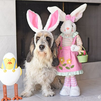 An Easter Photo With April And Chicken