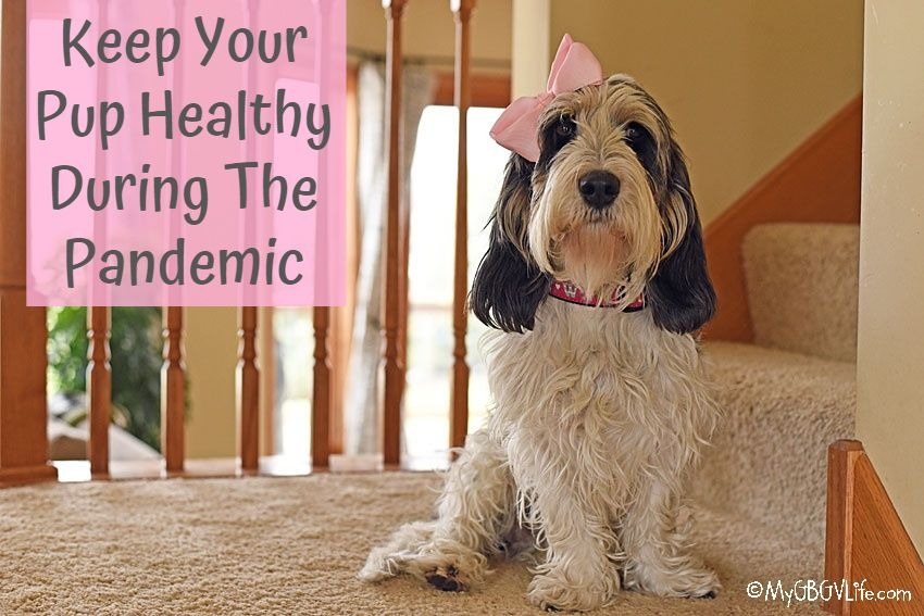 My GBGV Life Keep Your Pup Healthy During The Pandemic