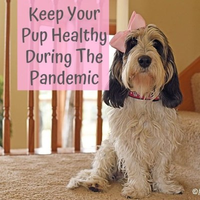 Keep Your Pup Healthy During The Pandemic