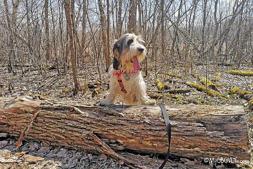 My GBGV Life Emma with the log