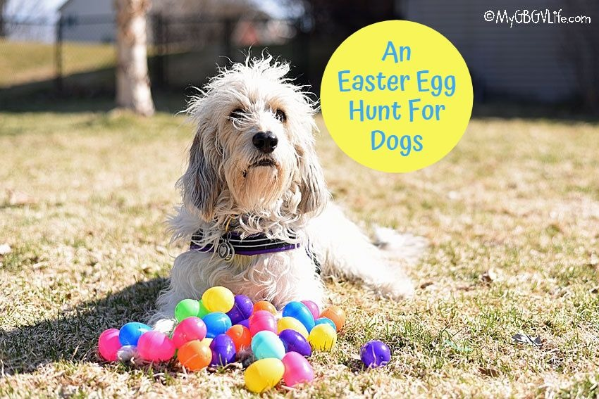 My GBGV Life An Easter Egg Hunt For Dogs
