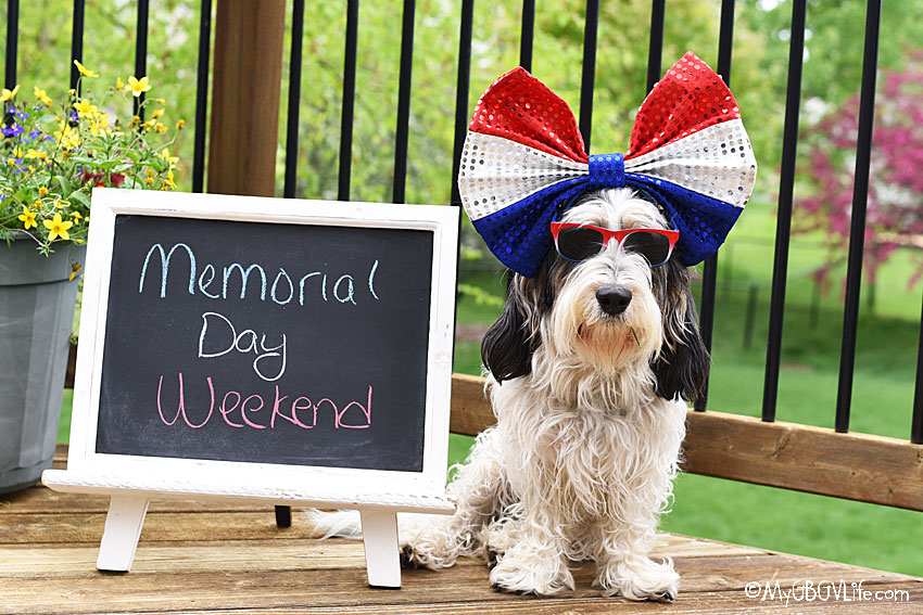 My GBGV Life 5 Dog Safety Reminders On Memorial Day Weekend