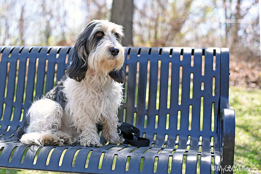 My GBGV Life Madison on the bench