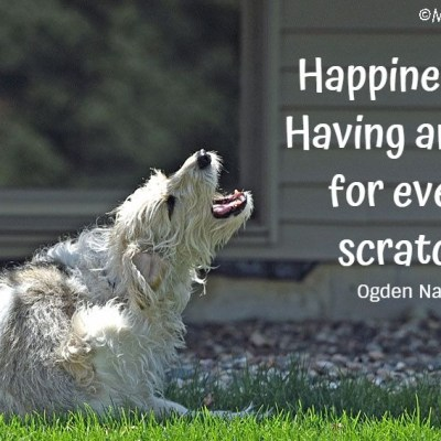 Happiness Is: Having An Itch For Every Scratch