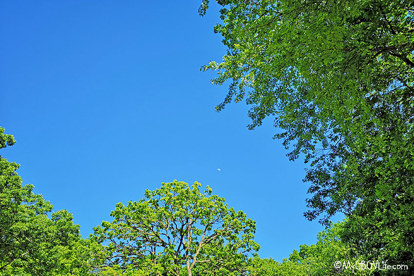My GBGV Life blue sky